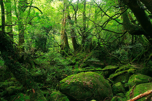 Brocelandia el bosque encantado gu a del trotamundos for Lo espejo 0450 el bosque